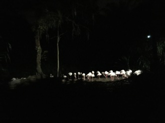 Schwanen- resp. Flamingosee